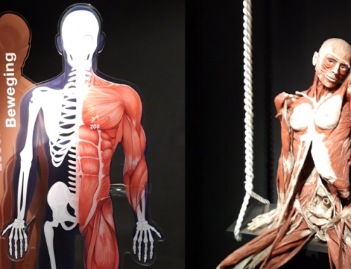 Body Worlds Museum, Amsterdam